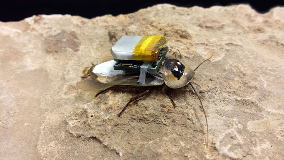 Cyborg Kakkerlak